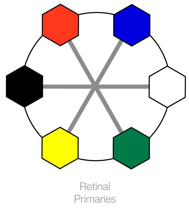retinal-primaries